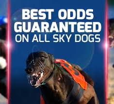 betfred-greyhounds-300